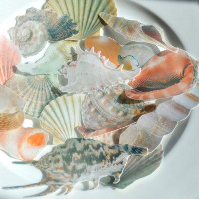 Wickstead's-Eat-Me-Edible-Sugar-Free-Vanilla-Wafer-Rice-Paper-Seashells-Sea-Shell-(3)