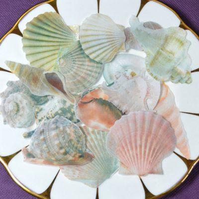 Wickstead's-Eat-Me-Edible-Sugar-Free-Vanilla-Wafer-Rice-Paper-Seashells-Sea-Shell-(5)
