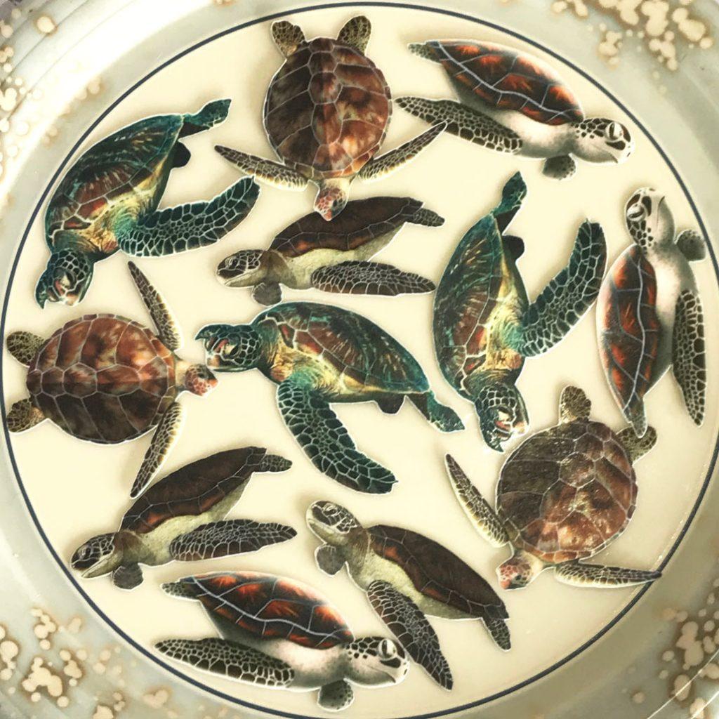 Wickstead's-Eat-Me-Edible-Wafer-Rice-Paper-Ocean-Sea-Turtles