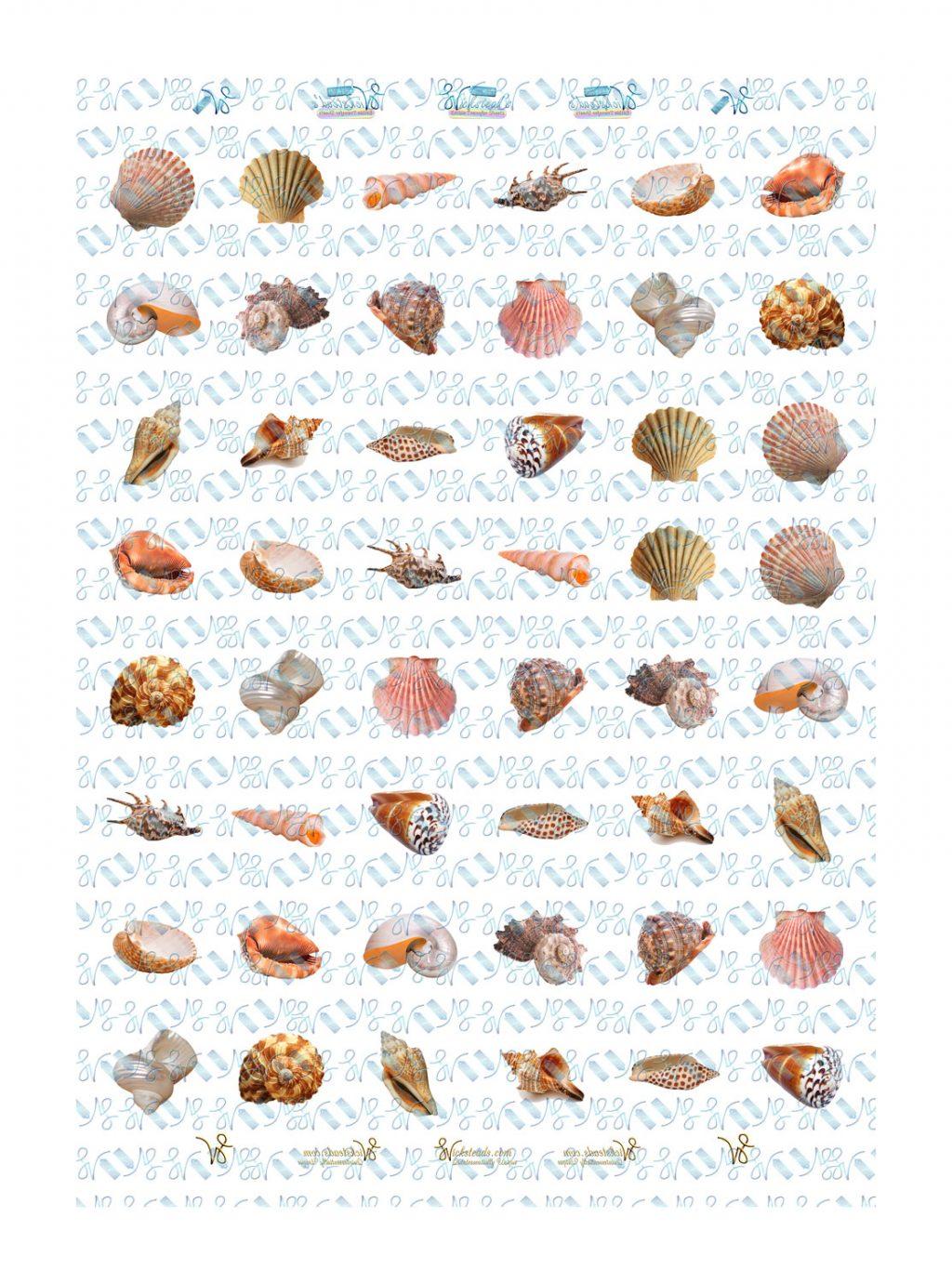 Wickstead's-Eat-Me-Edible-Meringue-Transfer-Sheets–Seashells-(2)