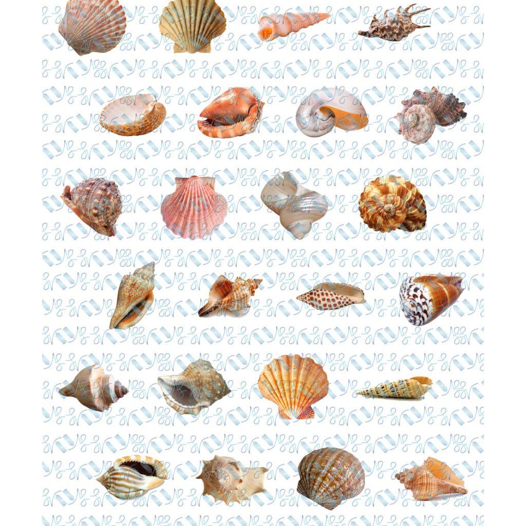 Wickstead's-Eat-Me-Edible-Meringue-Transfer-Sheets–Seashells-(3)